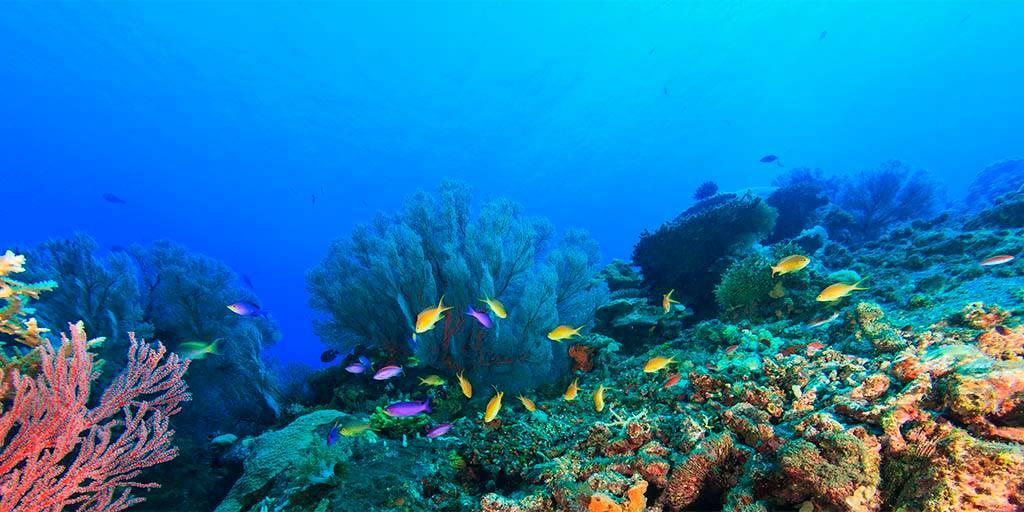 Laroche Posay Anthelios Marine Life Reef